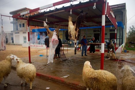 In Tunisia we have noticed it is common that live animals accompany dead ones of the same kind.